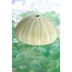 Alan Blaustein Sea Glass with Sea Urchins 2 Photographic Print