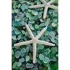 Alan Blaustein Sea Glass with Starfish 2 Photographic Print on Canvas