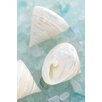 Alan Blaustein Leinwandbild Sea Glass with Sea Shells, Fotodruck