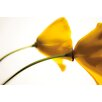 Portfolio Canvas Decor Arched Yellow Poppies by Judith Gigliotti Graphic Art on Wrapped Canvas
