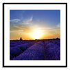 Gallery Direct Fields of Lavender Framed Photographic Print