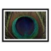 Gallery Direct New Era Peacock Feather Framed Photographic Print
