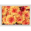Gallery Direct Colorful Mums Canvas Print
