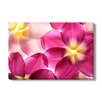 Gallery Direct Colorful Flower Petals Photographic Print on Wrapped Canvas