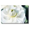 Gallery Direct 'Close Up of White Lotus Flower' Photographic Print on Wrapped Canvas