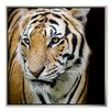 Gallery Direct 'Tiger' Framed Photographic Print on Canvas