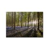 Graham & Brown Portfolio Bluebell Landscape Printed Photographic Print on Canvas