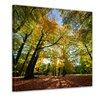 "Castleton Home Leinwandbild ""Blätterfall im Herbst"", Fotodruck"