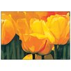 Castleton Home 'Yellow Time For Tulips' by Christian Coigny Graphic Art