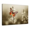 "Castleton Home Leinwandbild ""Roter Schmetterling auf düsterem Feld"", Fotodruck"