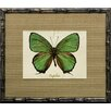 Castleton Home French Butterfly III Framed Graphic Art