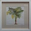 Castleton Home Palm Tree on Background IV Framed Graphic Art