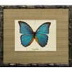 Castleton Home French Butterfly IV Framed Graphic Art