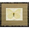 Castleton Home French Butterfly VI Framed Graphic Art