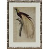 Castleton Home Birds of Paradise I Framed Graphic Art