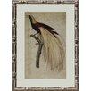 Castleton Home Birds of Paradise I Framed Graphic Art