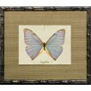 Castleton Home French Butterfly II Framed Graphic Art