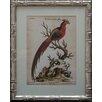 Castleton Home 19th Century Birds II Framed Graphic Art