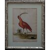 Castleton Home 19th Century Birds III Framed Graphic Art