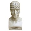 Castleton Home Large Distressed Glazed Ceramic Phrenology Head Bust
