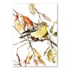 Americanflat Goldfinch 2 by Suren Nersisyan Art Print