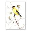 Americanflat Poster Goldfinch V, Kunstdruck von Suren Nersisyan in Gelb
