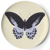 Thomas Paul Metamorphosis Coaster (Set of 4)