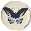 Thomas Paul Metamorphosis Coaster (Set of 4)