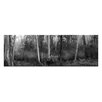 Artist Lane Tranquil Forest by Andrew Brown Photographic Print on Canvas in Black/White