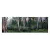Artist Lane Tranquil Forest by Andrew Brown Photographic Print Wrapped on Canvas