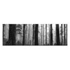 Artist Lane Elderly Giants, Dandenong Ranges by Andrew Brown Photographic Print Wrapped on Canvas in Black/White