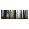 "Artist Lane Leinwandbild ""Elderly Giants, Dandenong Ranges"" von Andrew Brown, Fotodruck"