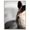 Artist Lane 'Horse 3' by Joe Vittorio Framed Photographic Print on Wrapped Canvas