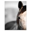 Artist Lane 'Horse 3' by Joe Vittorio Photographic Print on Wrapped Canvas