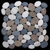 Pebble Tile Coin Random Sized Natural Stone Pebble Tile in Multi