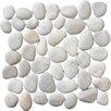 Pebble Tile Classic Pebble Random Sized Natural Stone Pebble Tile in White