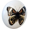 House Additions Butterfly Drawer Knob (Set of 4)