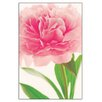 House Additions 'Pink Peony' by Plina Plotnikova Photographic Print Plaque