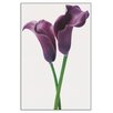 House Additions 'Pueple Calla Lilies' by Innes  Photographic Print Plaque