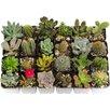 ShopSucculents 20 Piece Unique Cacti and Succulents Plant in Pot Set