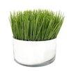 Mercury Row Grass in Cylinder Pot