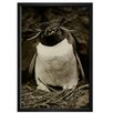 Mercury Row Sclater Penguin Framed Photographic Print