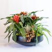 TC Floral Company Exotic Bromeliad and Succulent in Concrete Bowl