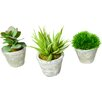 TC Floral Company Greenery 3 Piece Succulent Set in Aged Pots