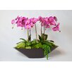 TC Floral Company Orchid in Metal Boat