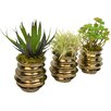 TC Floral Company 3 Piece Succulent Trio in Container Set