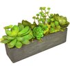 TC Floral Company Succulent Garden in Rectangle Box