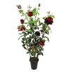Ascalon Musk Rose Bush in Pot
