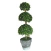 Ascalon Three Ball Box Round Topiary in Pot
