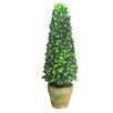 Ascalon Bay Tree Round Tapered Topiary in Pot